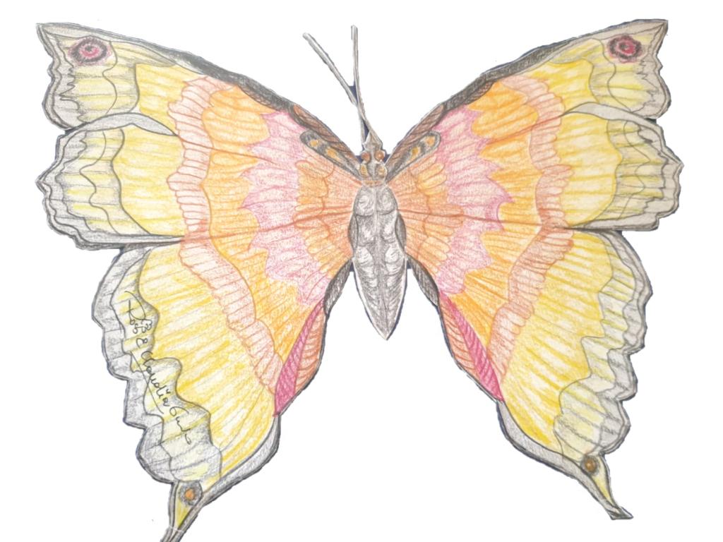 Farfalla con le ali aperte